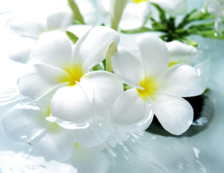تأثیر گل و گیاه روی حالت روحی افراد