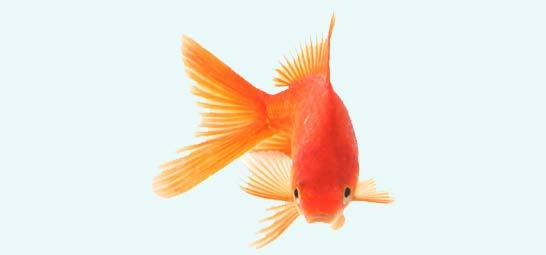 اموزش سبزه گندم تنگ ماهی Index of /savehsara/sakhtani/norouz